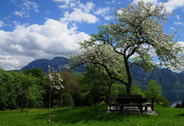 Margarethengut Apfelblüte